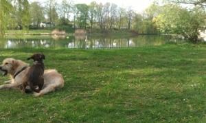 Hundepark Berlin Orankesee