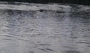 Endlich schwimmen im See