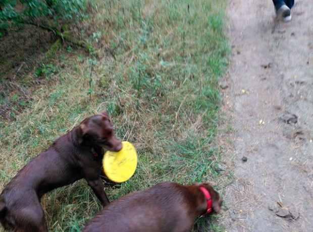 hundesport-arten