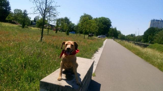 Hund in Berlin im Hundepark