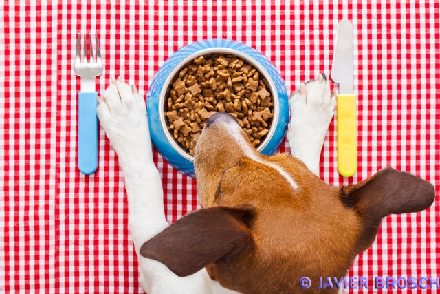 Hunde Ernährung