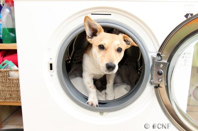 Sicherheitsgeschirr Hund
