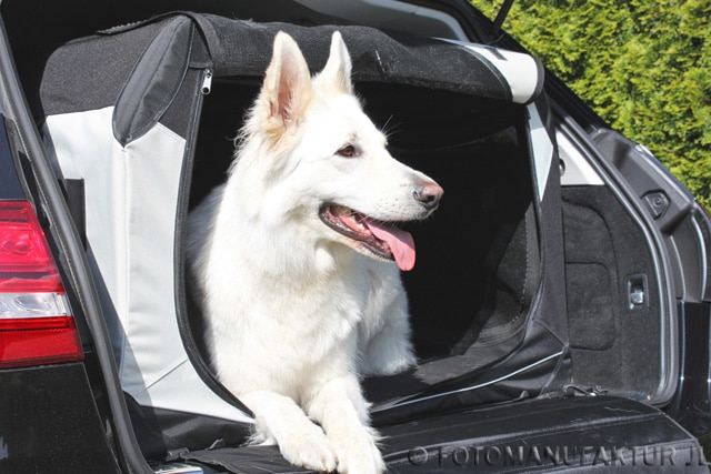 Transportbox Hund