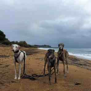 Hundereise Strand Koroni
