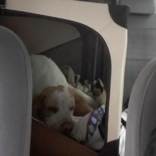 Faltbox auf Rücksitzbank