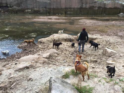 Hundesitter-Dogwalker-werden-Anne-Rosengrün-Dogwalking-Hundebetreuung-Tagesbetreuung-Hundekita-Nürnberg