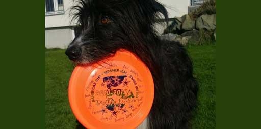 Das Dogfrisbee-ABC hilft dir, dich unter DiscDoggern zu verständigen