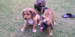 Tierschutz-Hunde
