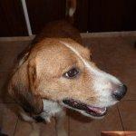 Ketten-Hund Kasperi