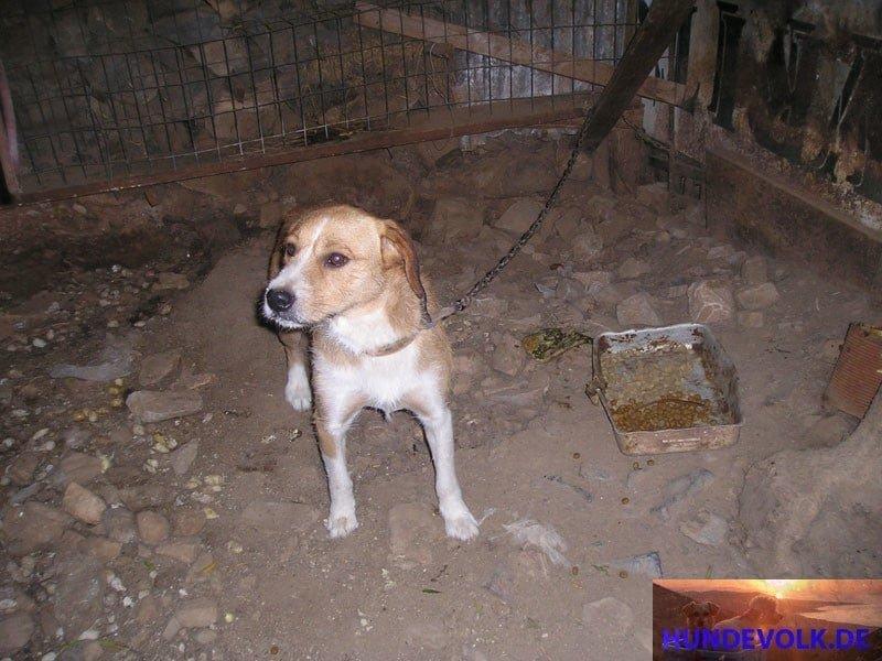 , illegale Haltung von Kettenhunden