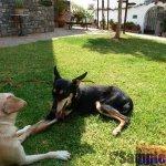 Angefahrener Hund Shadow