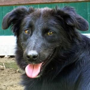 Månadens hund juli 2018 - Alessio