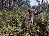 Daisy skog