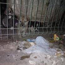Vid sopcontainern där valparna hittades