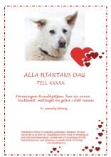 Alla Hjärtans Dag Dingo