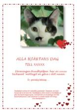 Alla Hjärtans Dag Katt