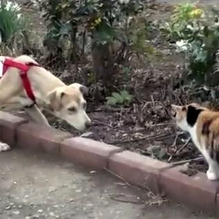 hund-katt1