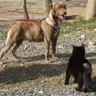 hund-katt2