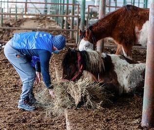 hästar17