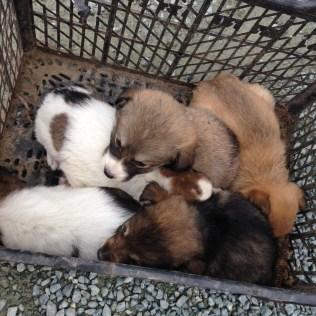 Räddningen: Cipy-Corina-Ursu-Cristina-Carla