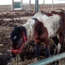 EU häst2