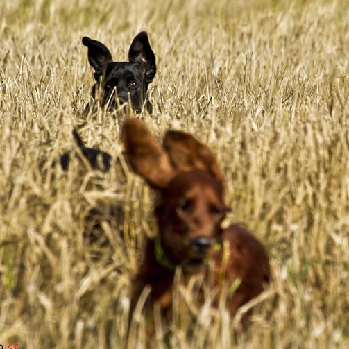 inkallningskurs hundkurs hundutbildning