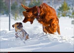 BAT hundmöteskurs hundutbildning  hundkurs