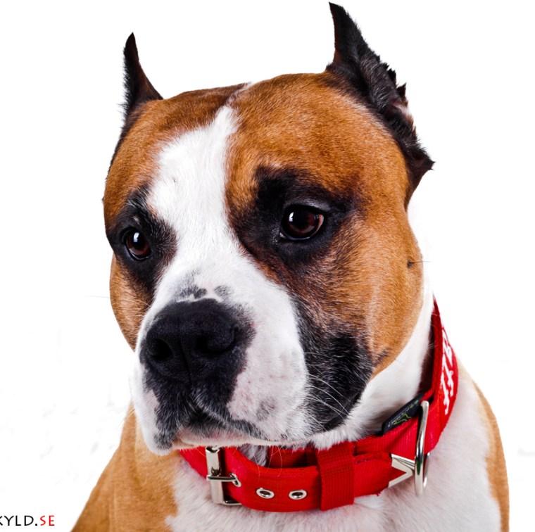 kamphund hundkurs hundutbildning