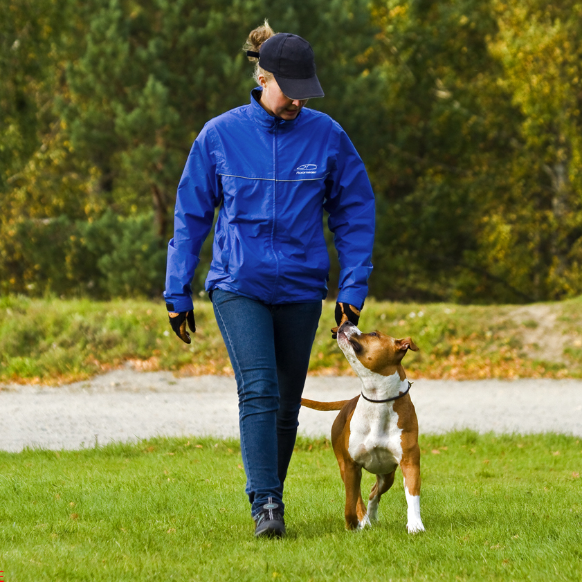 rallylydnad hundutbildning hundkurs
