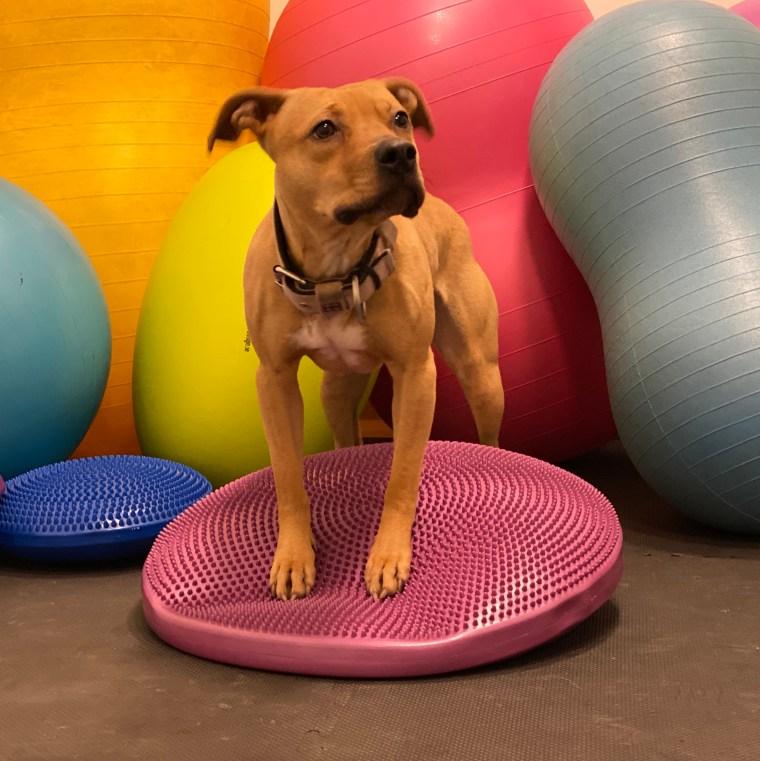 hundkurs hundutbildning balansträning