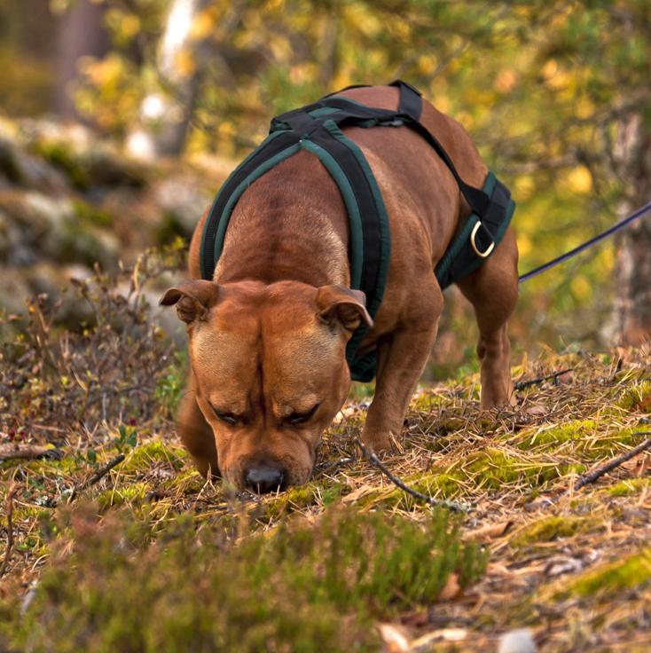 spårkurs hundutbildning hundkurs personspår