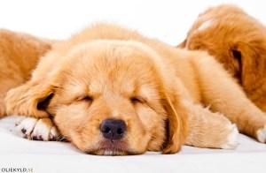 hundutbildning hundkurs