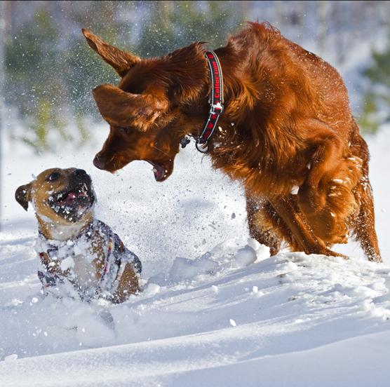 BAT hundkurs hundutbildning hundmöteskurs