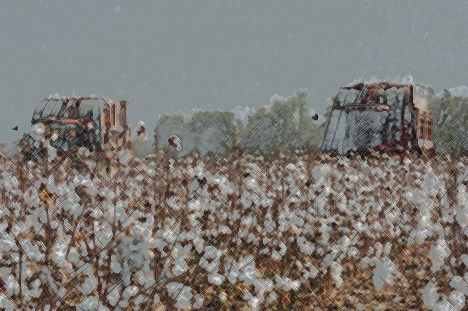 two cotton pickers