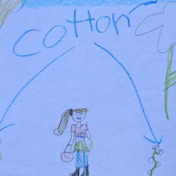 child's drawing of cotton plants