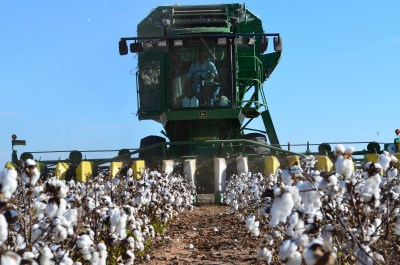 GMO cotton harvest in Texas