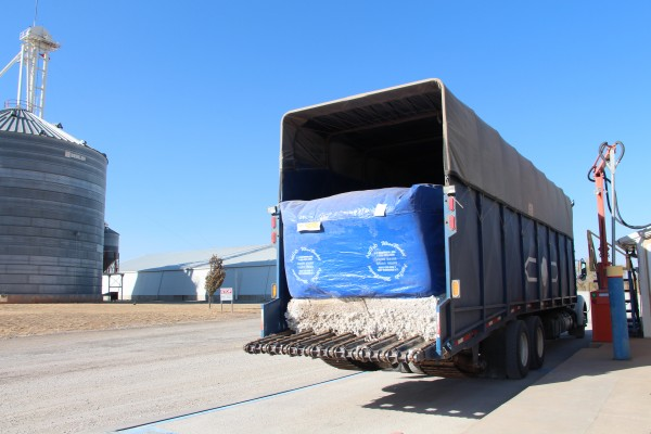 Cotton module arrives on the cotton gin grounds