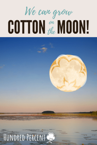 cotton on the moon