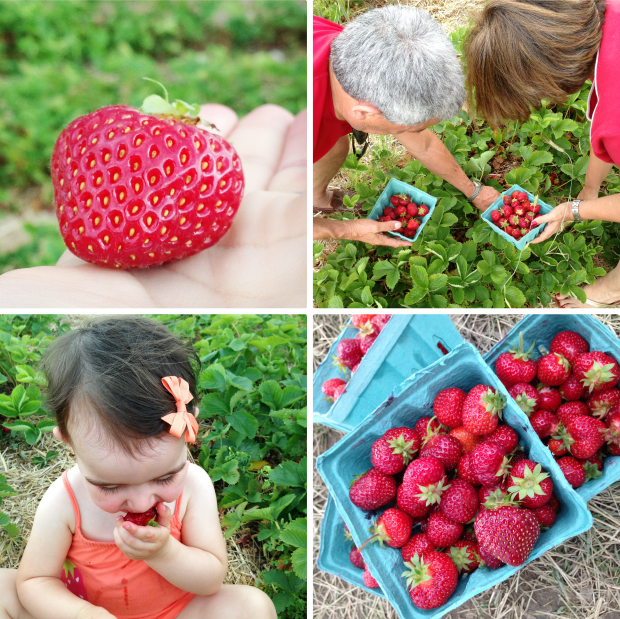 Strawberry Picking Great Family Activity