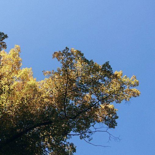 sonniger Oktober