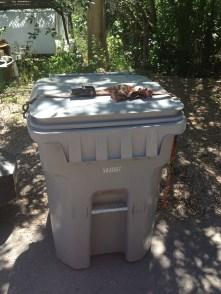 Bear safe trash