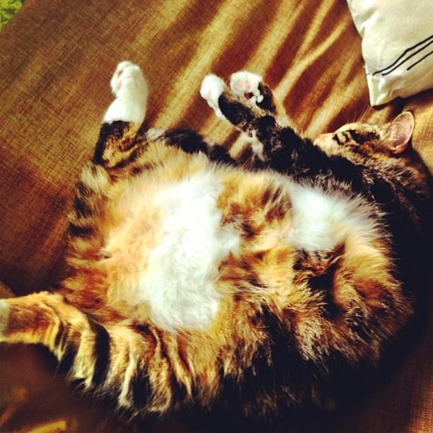 One spherical cat named Ojjos
