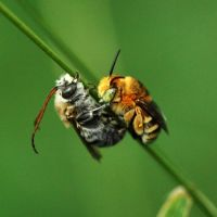 Snuggle Bees: Bee-ing totally adorable.