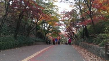 More fallen leaves
