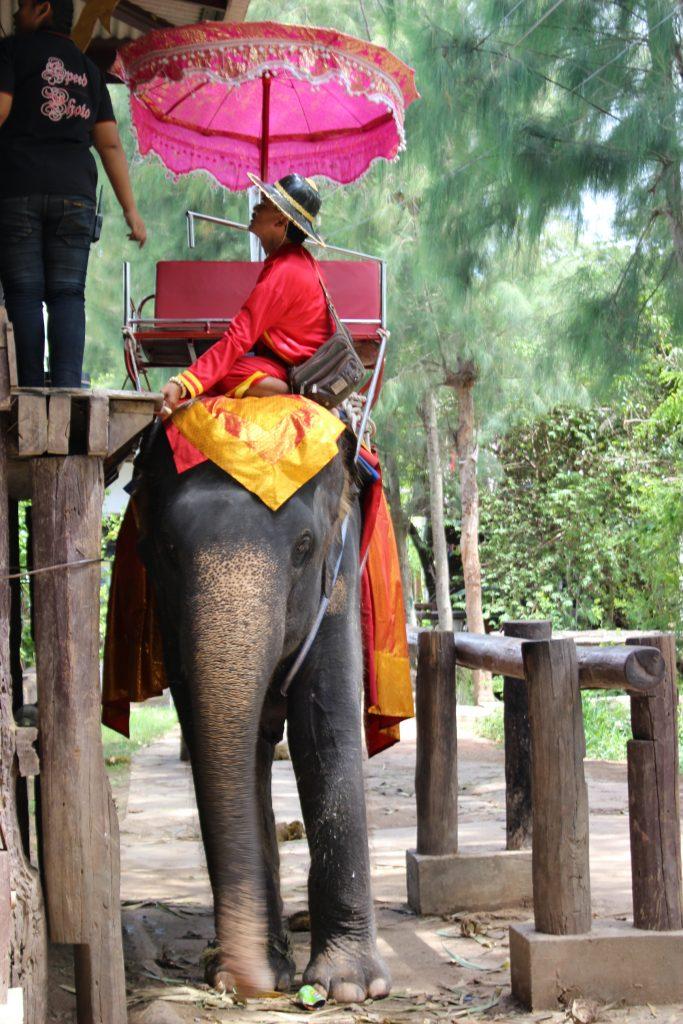 Bangkok Tour Guide with Elephant