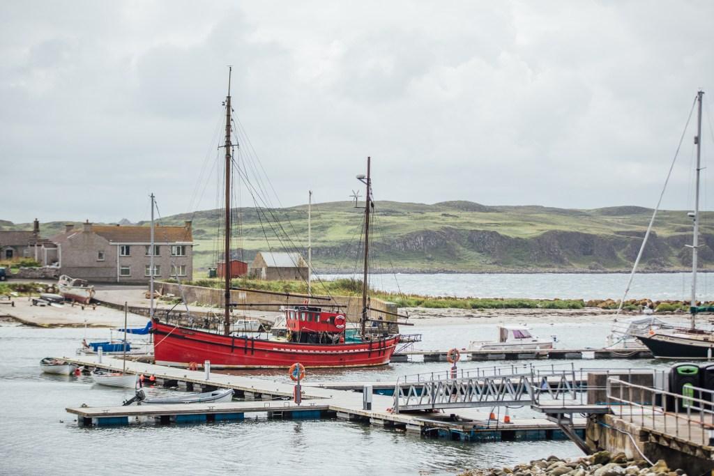 Islander Kelp