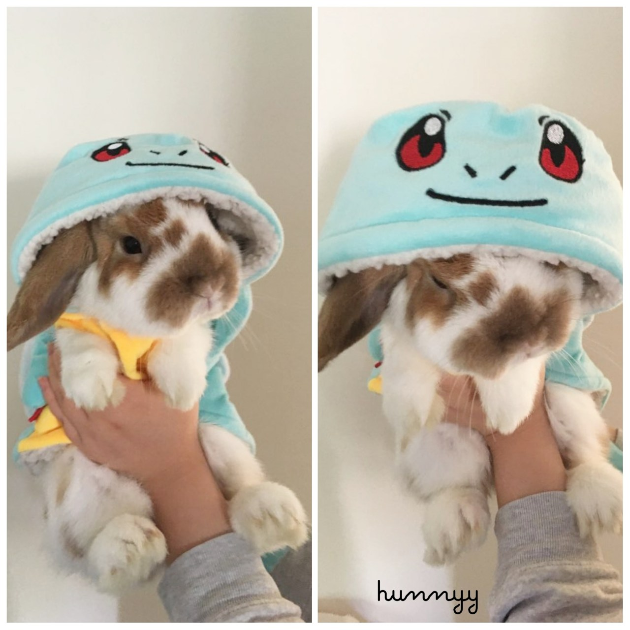 Bunny Update! Bunny Pictures Too Cutee!