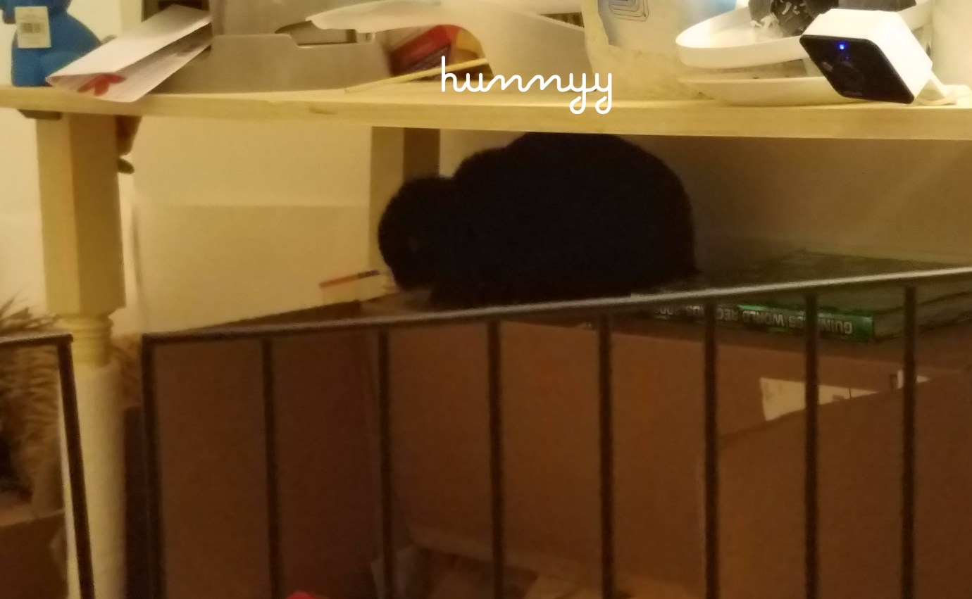 ::FRIYAY:: Hunnyy's bunnies!!-1.jpg