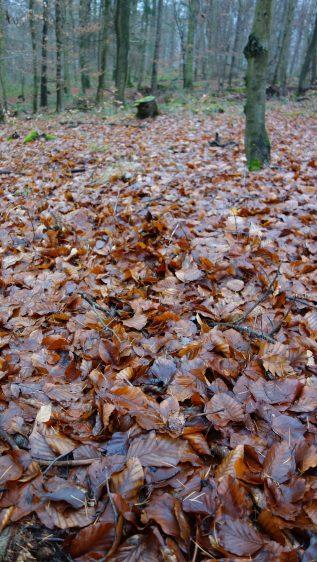 Fährte in Blättern