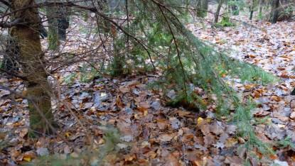 Bett von Rehwild unter Baum